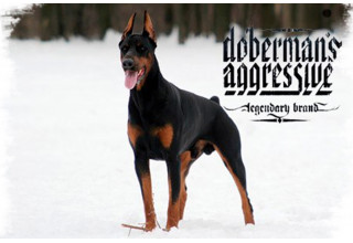 Одежда Dobermans Aggressive